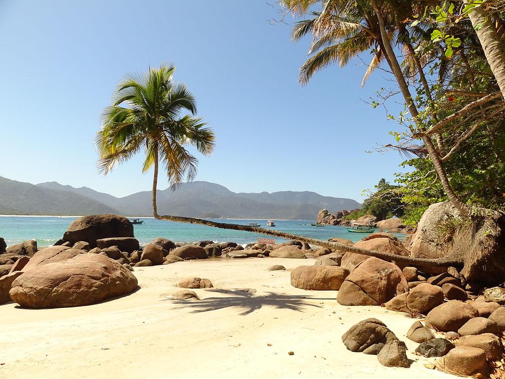 O famoso coqueiro deitado da Praia do Aventureiro em Ilha Grande, Angra dos Reis, RJ.